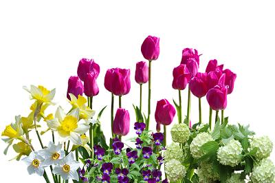 spring-3002470_640
