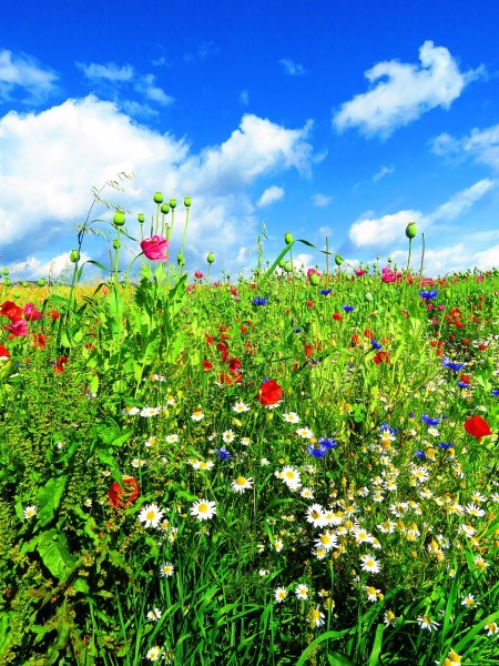 meadow-1574318_1280