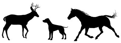 Tier Quiz Mit Lösungen Zum Ausdrucken Kostenlose Spiele