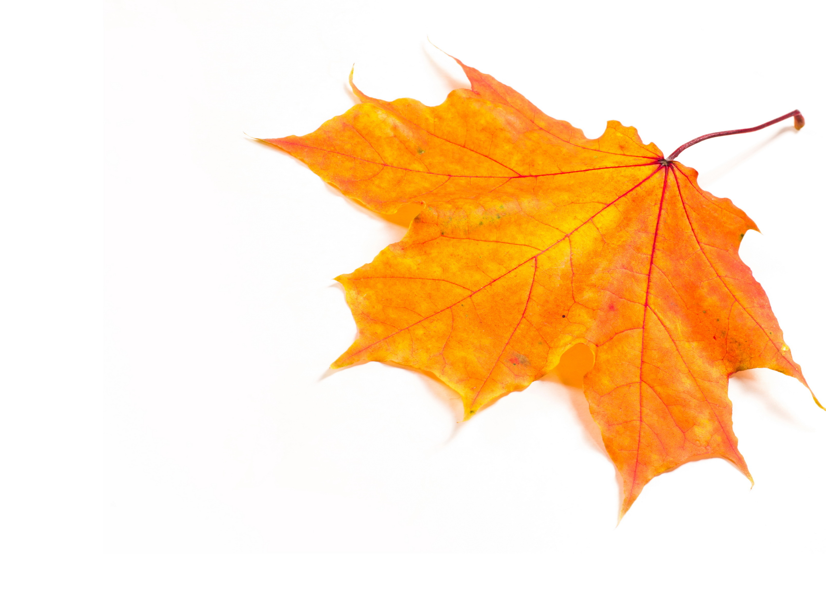 Blaetterbilder-basteln-Ideen-fuer-den-Herbst-Fuer-Menschen-mit-Demenz