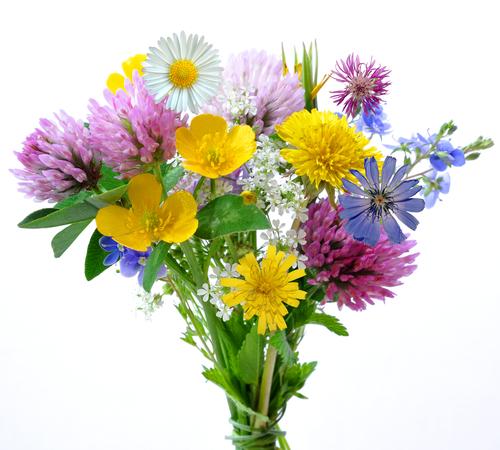 Blumenstrauss-Sprichwort-Geschichten-fuer-Menschen-mit-Demenz
